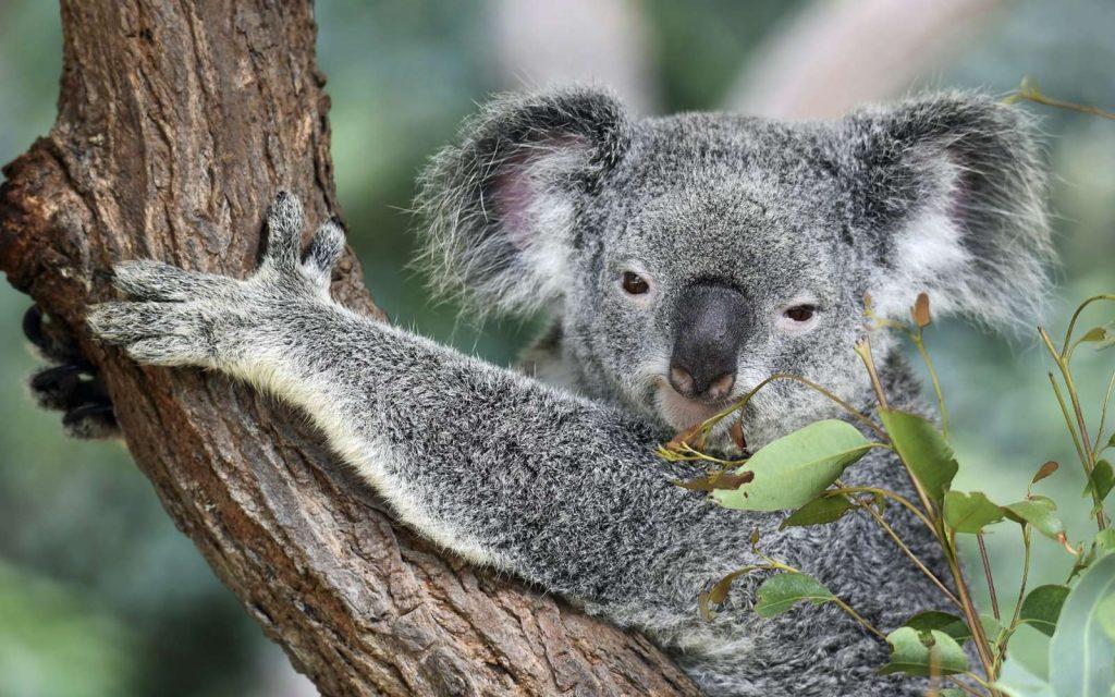 L'appendice est une structure anatomique que l'on retrouve chez de nombreuses espèces pourtant très différentes, de l'Orang-outan au koala, en passant par le castor et bien sûr, l'humain.